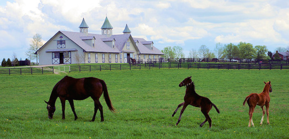 Kentucky frankfort lexington horses bourbon for Horse farm
